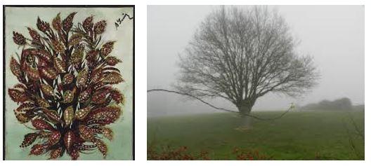 Juxtapositions oulipiennes d'images - Poésie des contrastes Bouque10