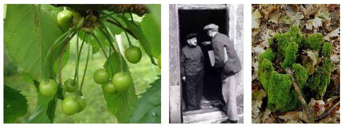 Juxtapositions oulipiennes d'images - Poésie des contrastes Toujou10