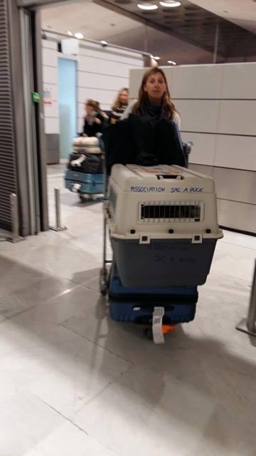 Malys adoptée par laura à Montaigut Aeropo10