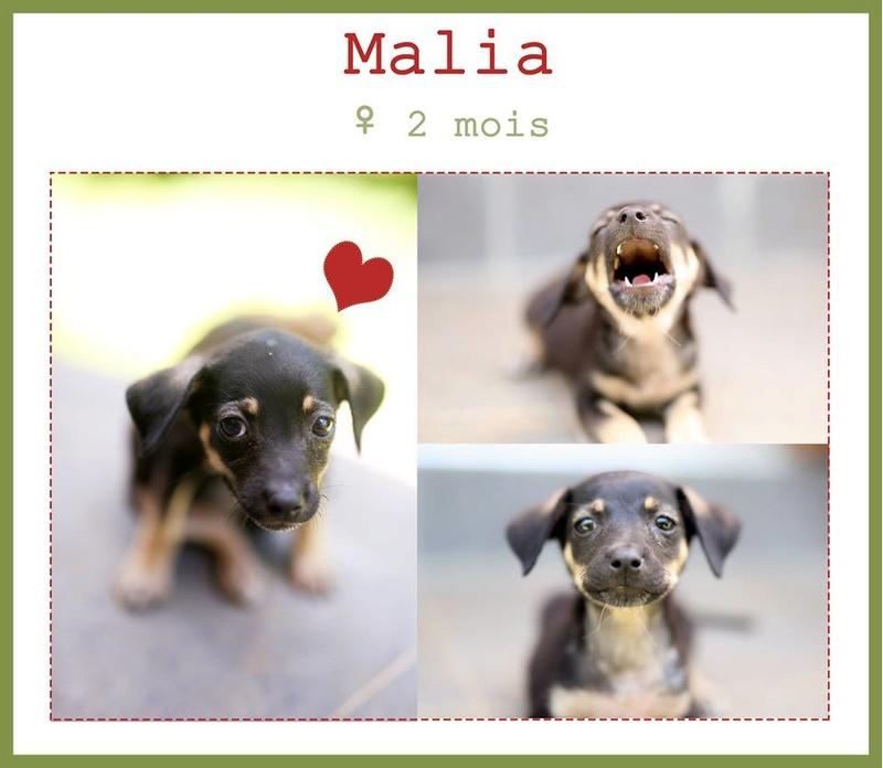 Malia adoptée !!! Malia10