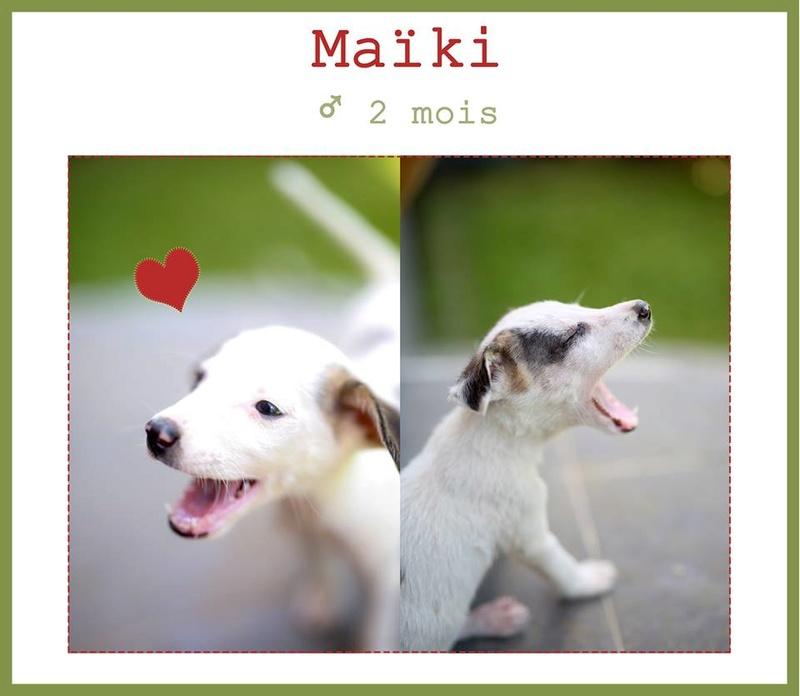 Maïki  adopté par Florian D. et Melle Megane B. dans le 18 Mayki10