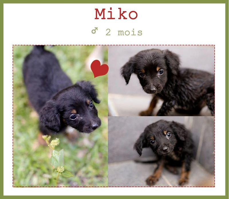 Miko adopté par M. et MMe T. en région parisienne Miko10