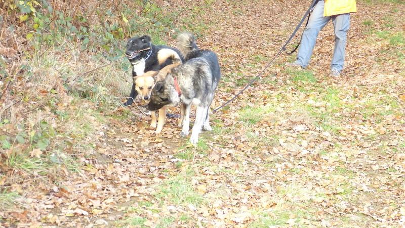 Post les chiens de Chantal - Page 3 P1190314