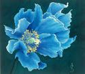 Coeurs brisés et amères souffrances [Privé Nataku] Blue2010
