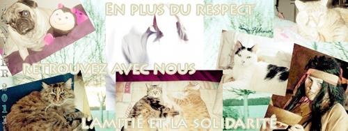 RF Le Respect Forum 500pat10