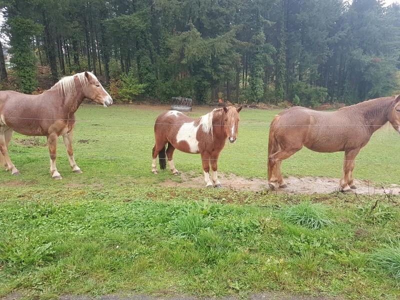 INDIANA - ONC poney typée shetland présumée née en 2000 - adoptée en juillet 2013 - Page 3 110