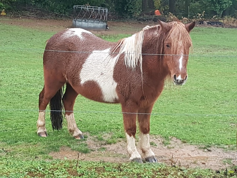 INDIANA - ONC poney typée shetland présumée née en 2000 - adoptée en juillet 2013 - Page 3 210