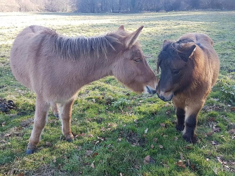 DIABLOTINE - ONC Mule née en 2014 - adoptée en juin 2016 par Amélie 711