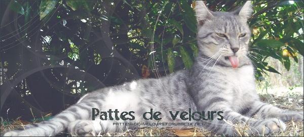 Forum sur les chats: Un amour à pattes de velours