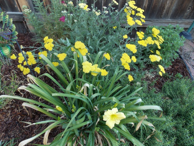 Jenn's Gardening thread- 2013 2011-111