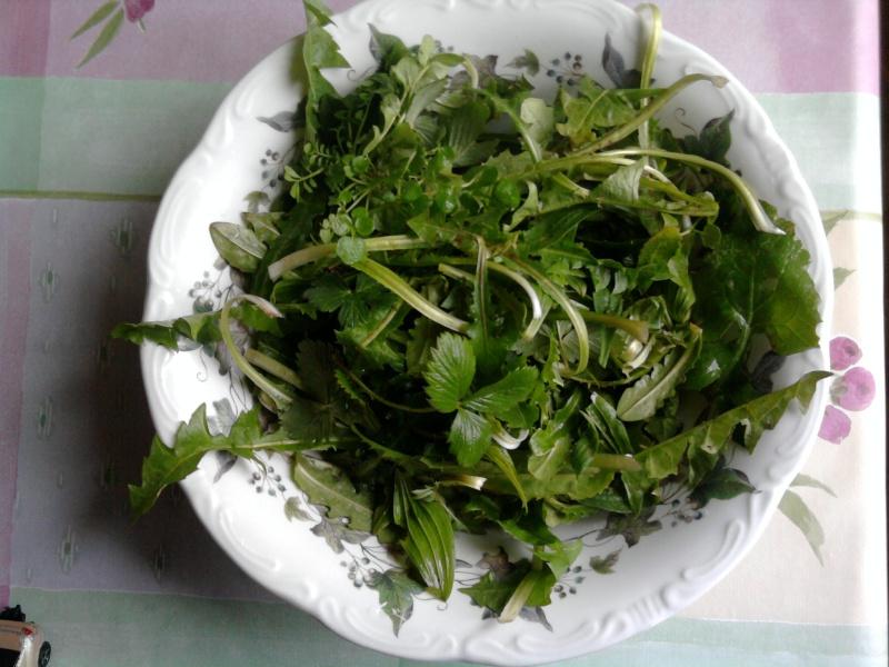 janvier, les salades sauvages Photo043