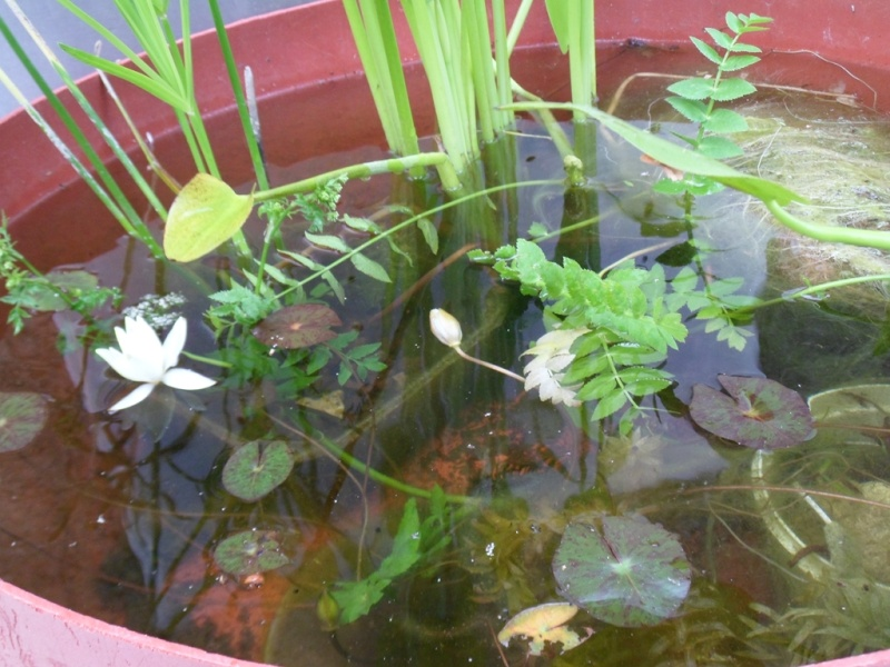 Bassin bois 030_co10