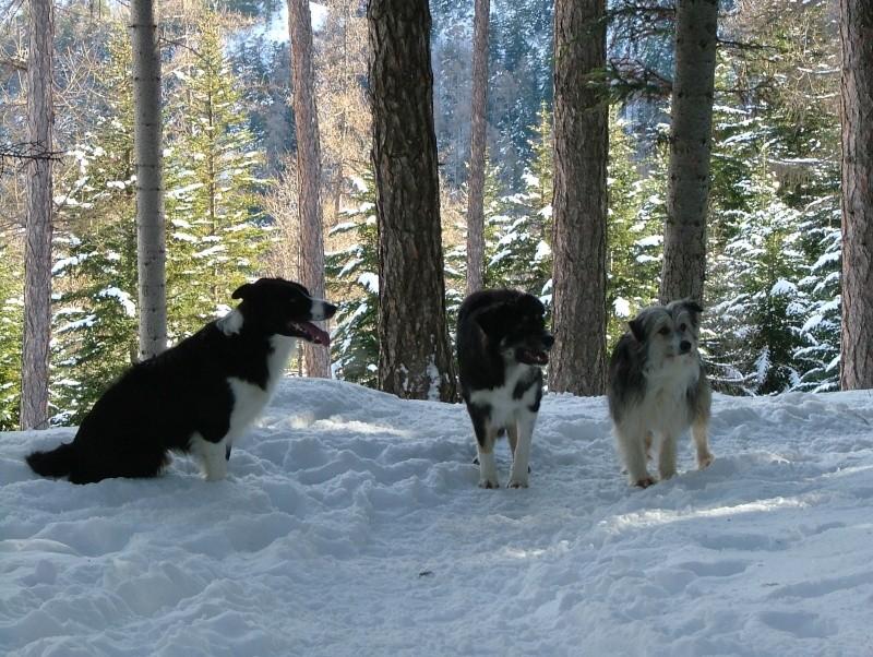 Quelqu'un a-t-il des chiens issus du Mont Kerchouan? - Page 2 Dscf3511