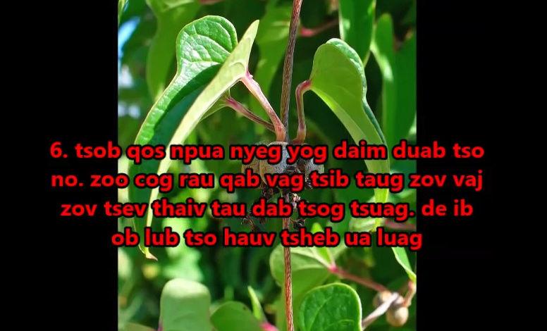 Tshuaj NTSUAB - Page 3 12310