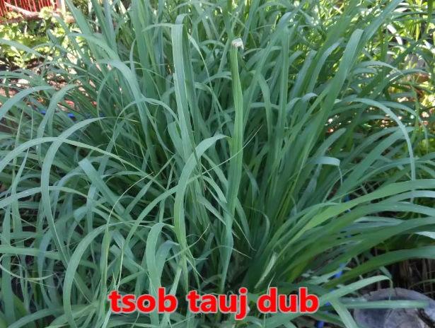 Tshuaj NTSUAB - Page 3 6710