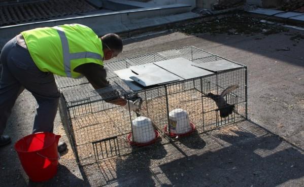 pigeons sous un hangar de stockage moyens de lutte - Page 2 30101010