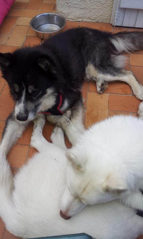 Chispi mâle malamute/husky de 8 ans a passé sa vie attaché (Alava, Espagne ) - Page 8 20121020