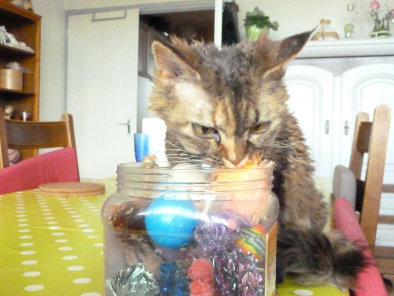 Quel est le jouet préféré de votre chat ? - Page 2 Photo_36