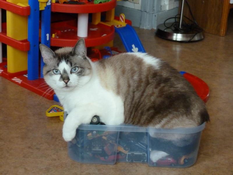 Quel est le jouet préféré de votre chat ? - Page 2 Photo_40