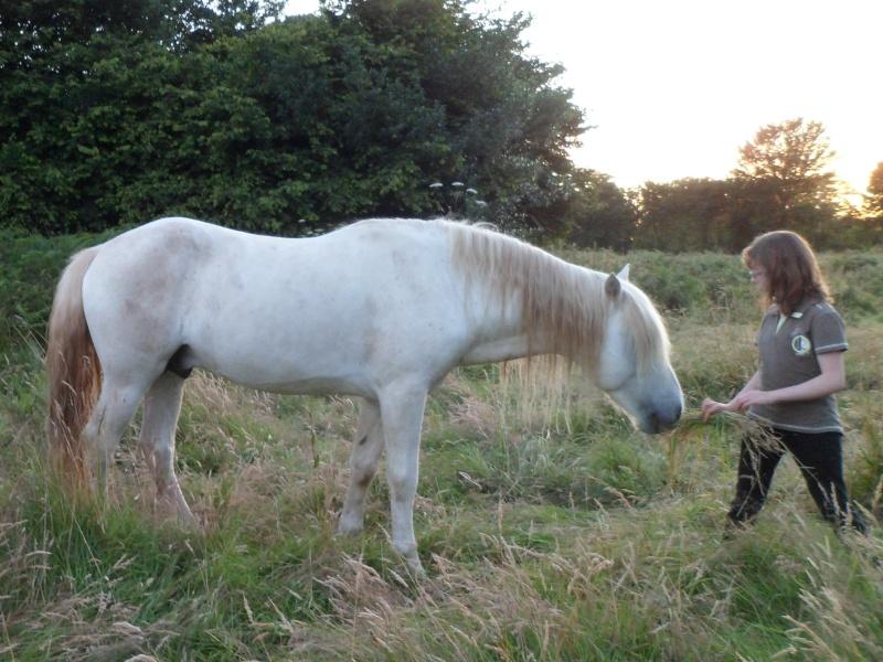 Cause cessation vends étalon approuvé et autres chevaux PP camargue Lambin12