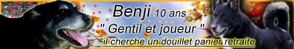 BENJI  male x groendal noir - SPA (54) 10 ans  DECEDE - Page 2 Benji10