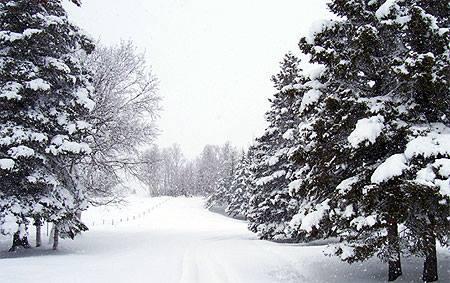 Paysage enneigés du Québec Tadous10