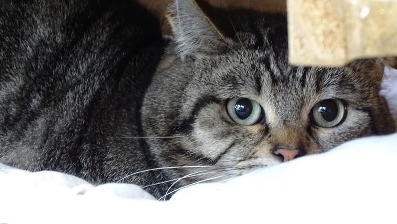 Quelques chats du refuge de Figeac Dsc01213