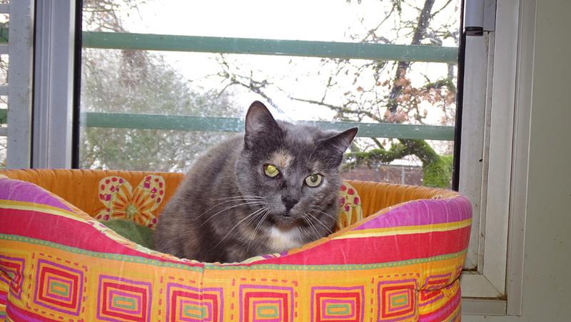 Quelques chats du refuge de Figeac Dsc01216