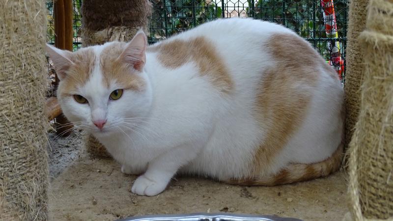 Quelques chats du refuge de Figeac Dsc01217