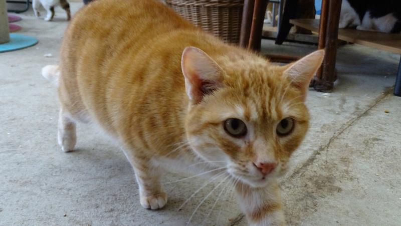 Quelques chats du refuge de Figeac Dsc01219