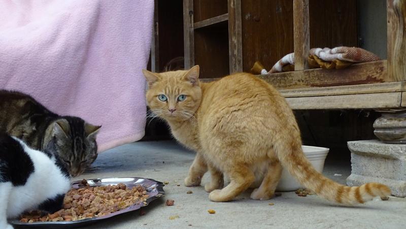 Quelques chats du refuge de Figeac Dsc01220