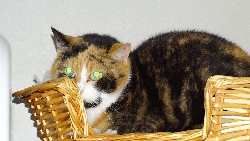 Quelques chats du refuge de Figeac Dsc01222