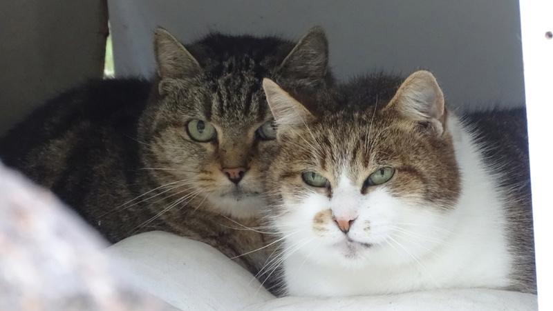 Quelques chats du refuge de Figeac Dsc01224