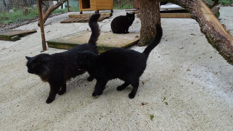 Quelques chats du refuge de Figeac Dsc01225