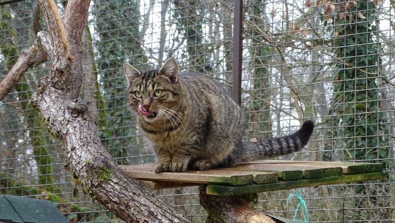Quelques chats du refuge de Figeac Dsc01226