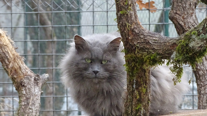Quelques chats du refuge de Figeac Dsc01227
