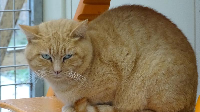 Quelques chats du refuge de Figeac Dsc01230