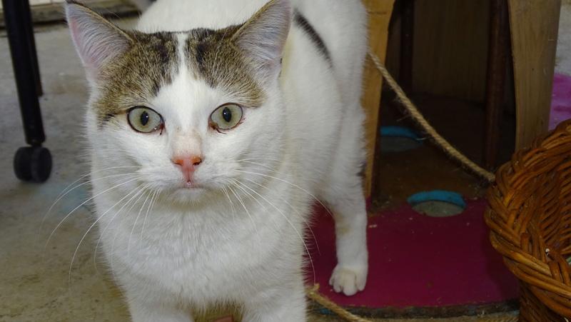 Quelques chats du refuge de Figeac Dsc01231