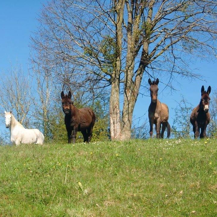 """Concours photos """"les compagnons de vos chevaux"""" gagnant Joël Fb_20110"""