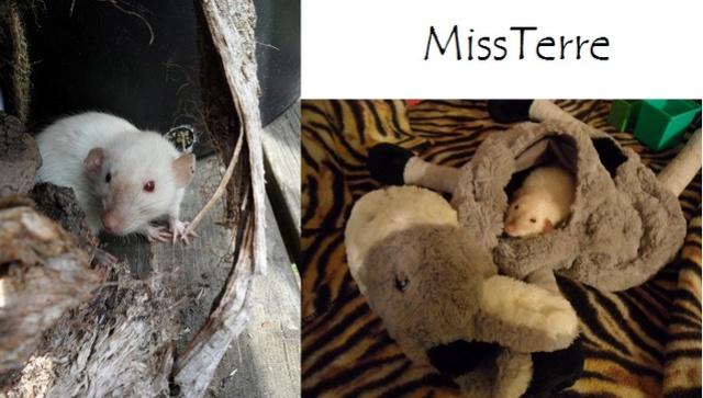 MissTerre & BouleDeGum Misste11