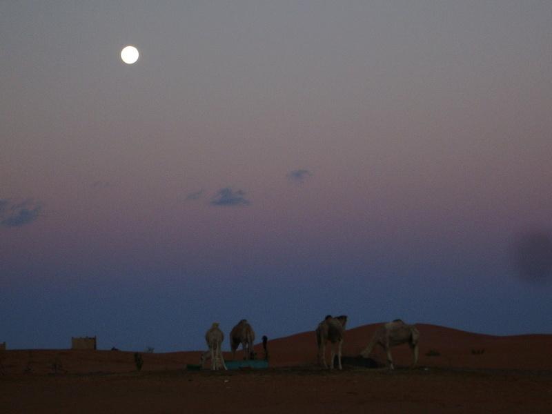 [Le désert] Recherche Dunes de sable 2006-022