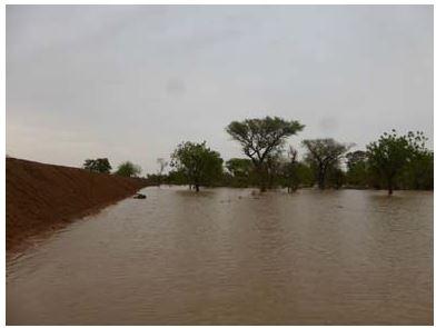 Nourrir l'Afrique, le défi des paysans de là bas, le Burkina - Page 2 Sorgho34