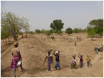 Nourrir l'Afrique, le défi des paysans de là bas, le Burkina - Page 2 Sorgho35