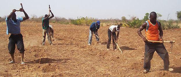Nourrir l'Afrique, le défi des paysans de là bas, le Burkina - Page 2 Sorgho36