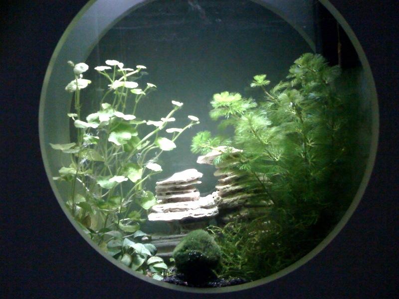 Question : Aquarium carrée plat   Photo510