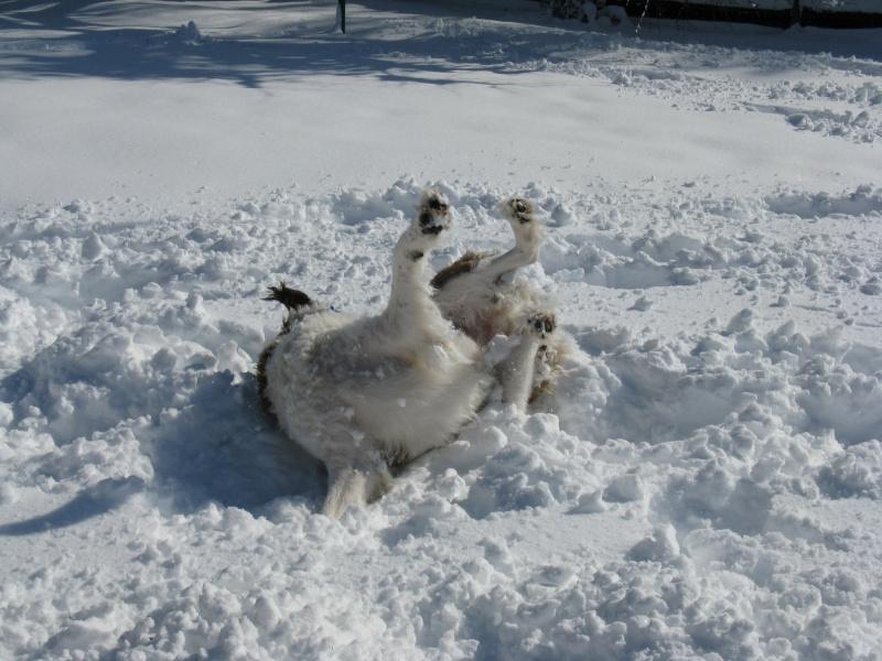Fun in the snow! Img_1910