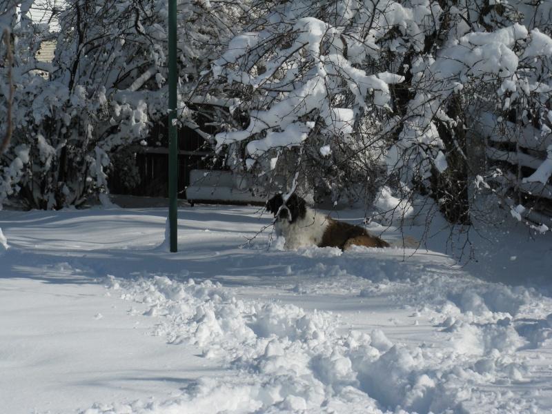 Fun in the snow! Img_1913