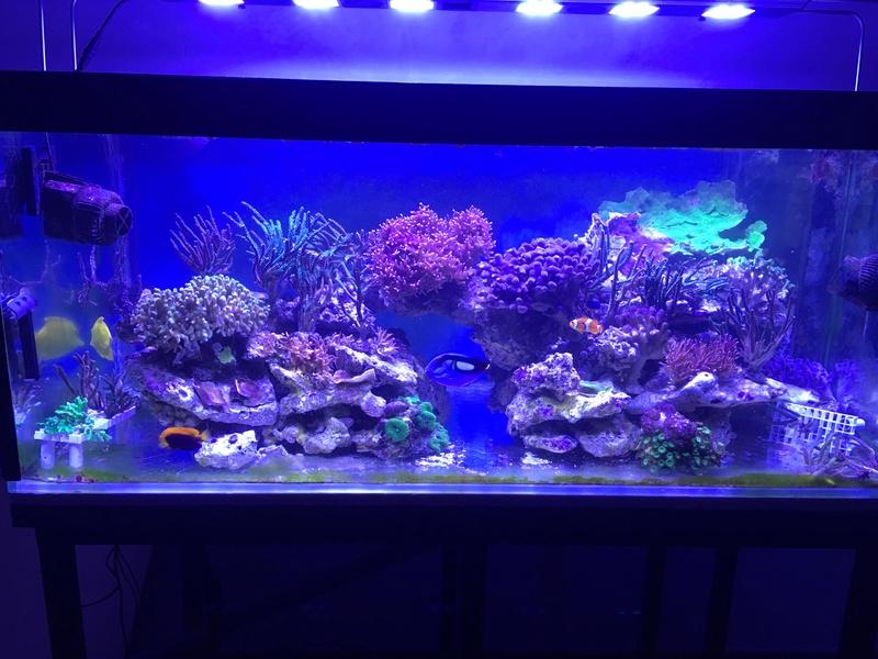 Mon nouveau reef 600 L Img_0510