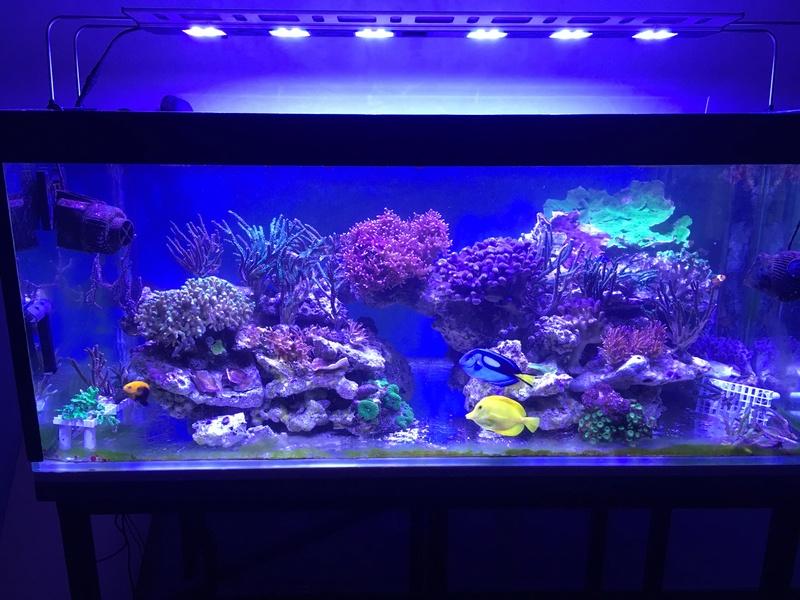 Mon nouveau reef 600 L Img_0511