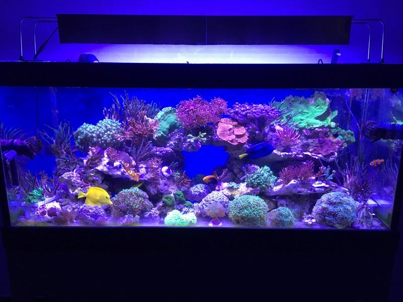 Mon nouveau reef 600 L Img_0517